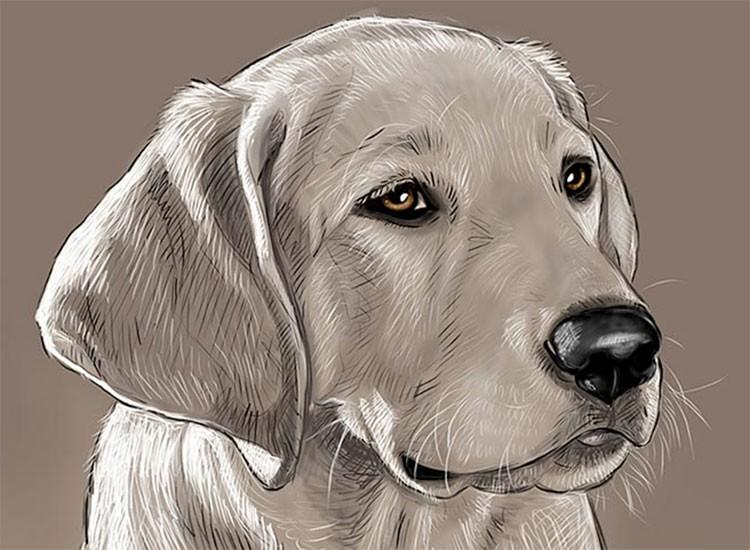 Home Remedy For Canine Parvo Parvovirus Beingstray Com