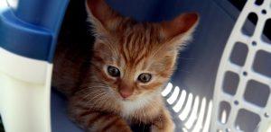 kitten in cat carrier