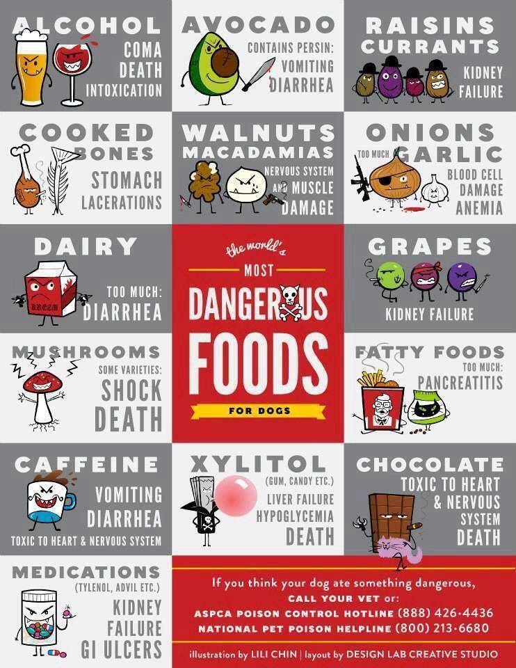 Foods That Are Dangerous To Dogs