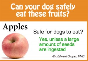 Is Fruit Safe For Dogs?