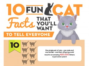 10 Fun Cat Facts