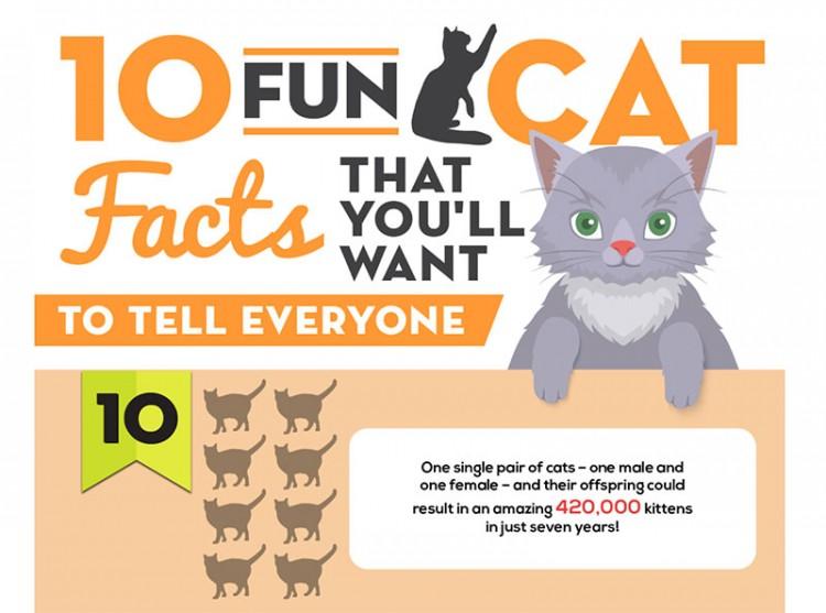 10 Fun Cat Facts