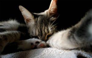 Squeaker the cat