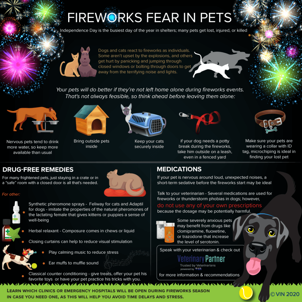 Fireworks Fear in Pets
